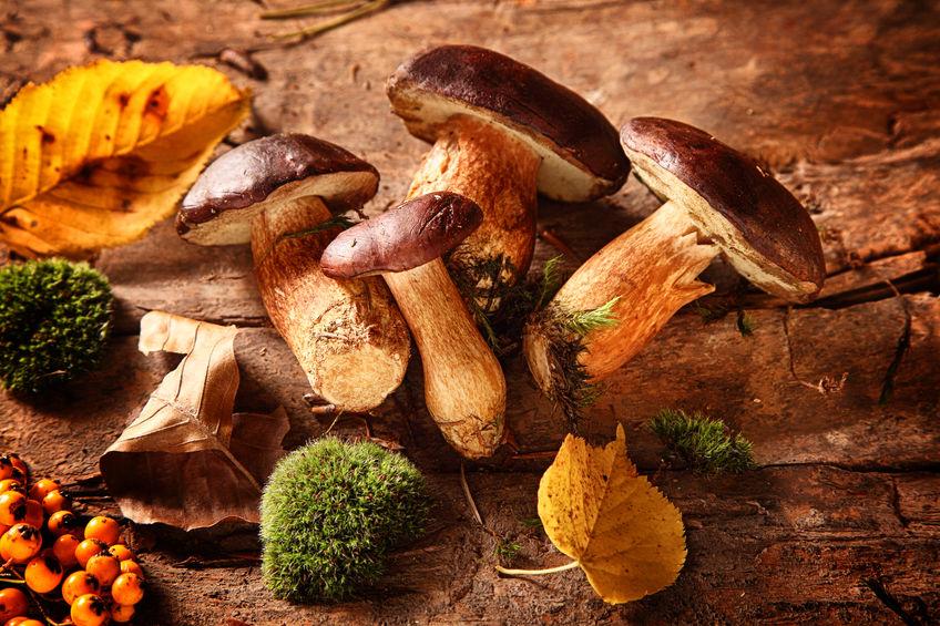 mushroom personalised nutrition